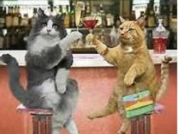 Two cats sitting at a bar clanging martini glasses
