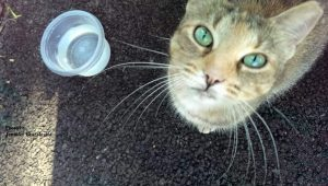 A cat next to a plastic cup of water looking up into the camera