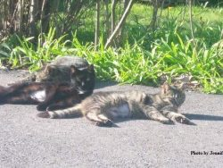 Three cats laying in the sun on pavement.
